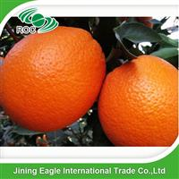 New crop price navel oranges in China